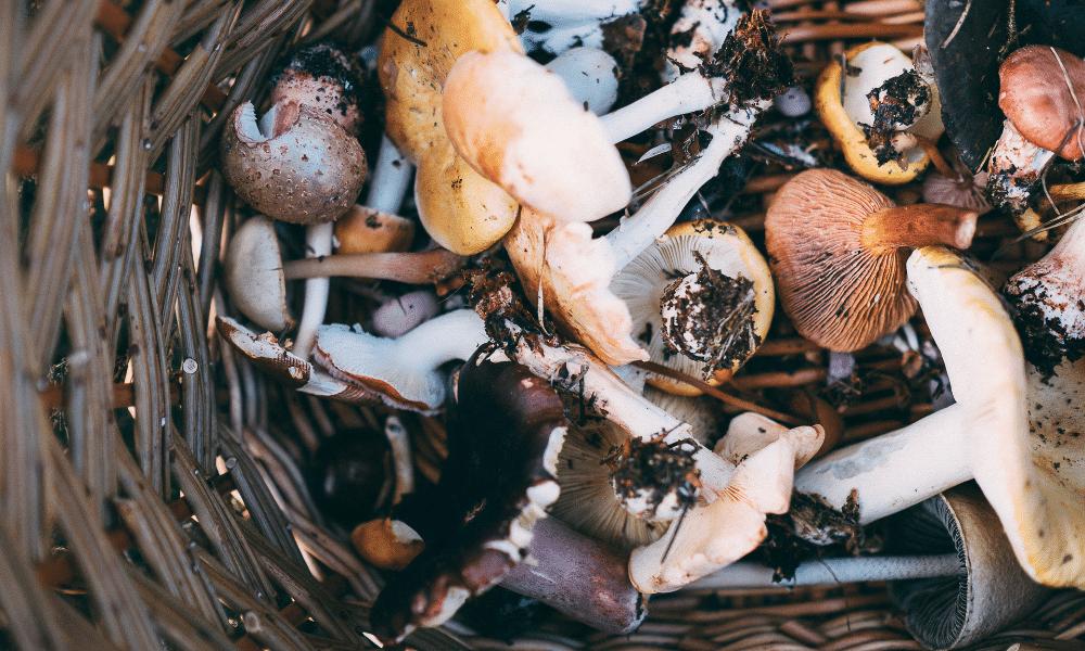 Wat jij nog niet wist over paddenstoelen: 5 weetjes