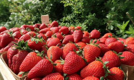 Feit of fabel: aardbeien moet je niet wassen