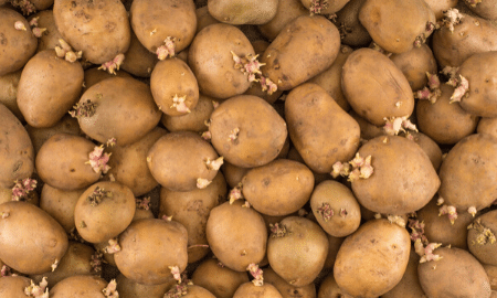 Feit of fabel: aardappelen met uitlopers mag je niet meer opeten