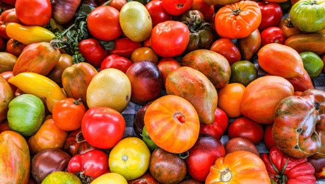 Ce que vous ne saviez pas sur les tomates anciennes : 5 anecdotes.