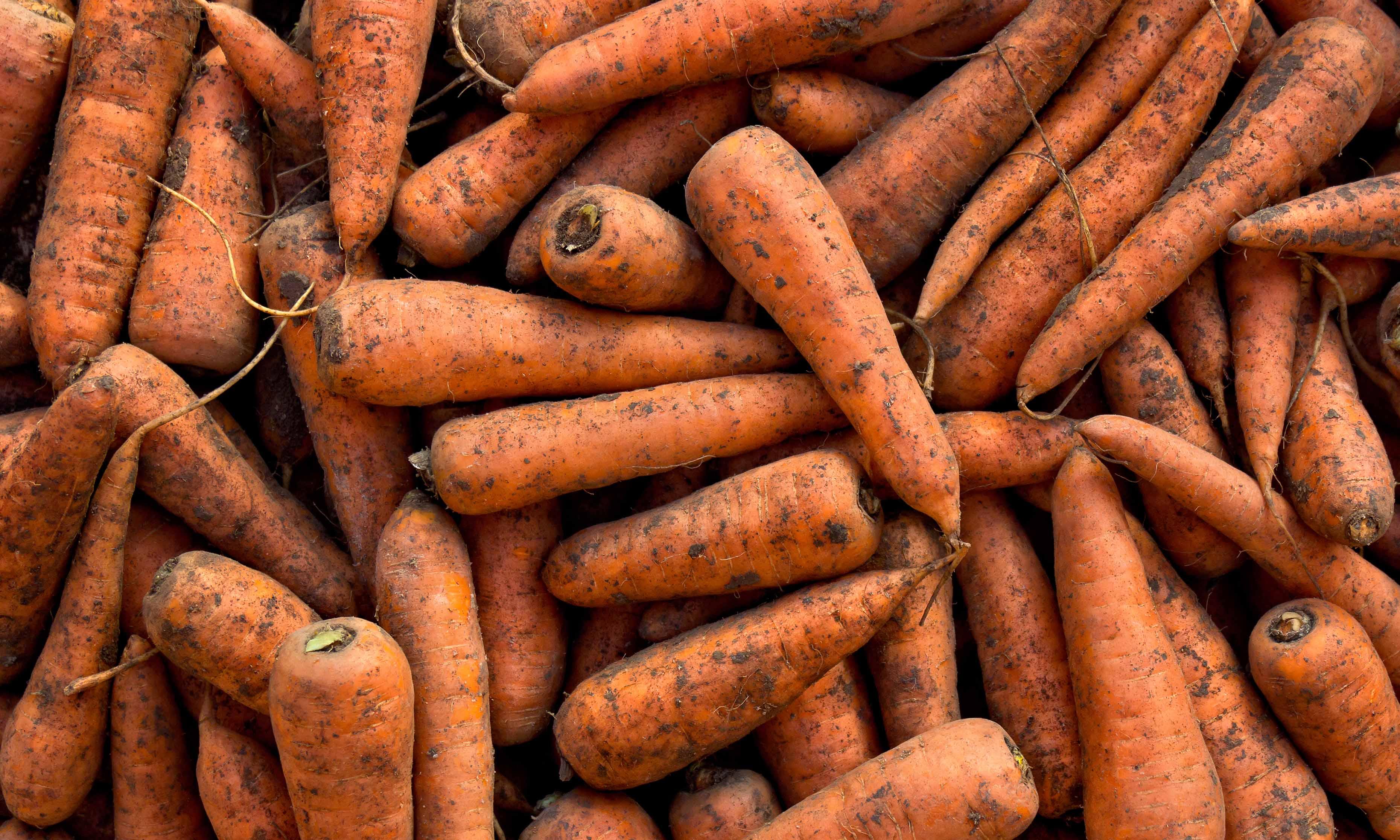 Ken jij het verschil tussen gewassen en ongewassen wortelen?