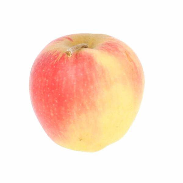 Pomme Belgica