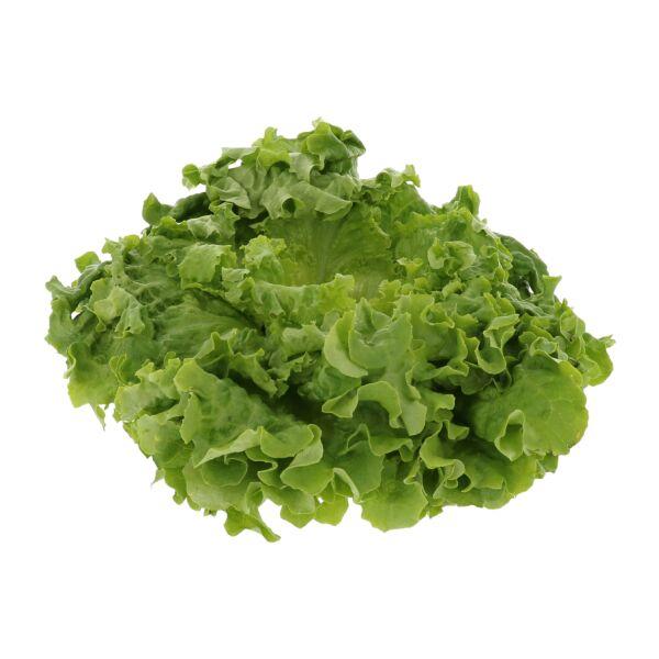 Salade de batavia